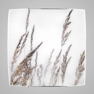 Настенно-потолочный светильник Nowodvorski 5616 brown glass