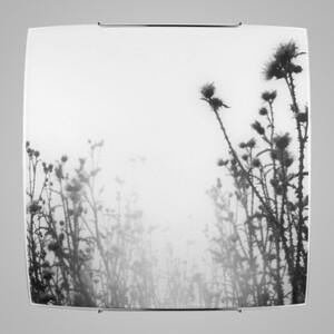 Настенно-потолочный светильник Nowodvorski 5618 thistles